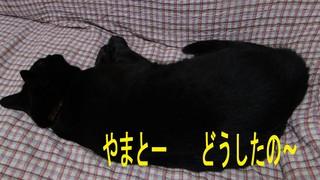 DSC09820のコピー.jpg